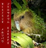 Cover MERZBOW, kakapo