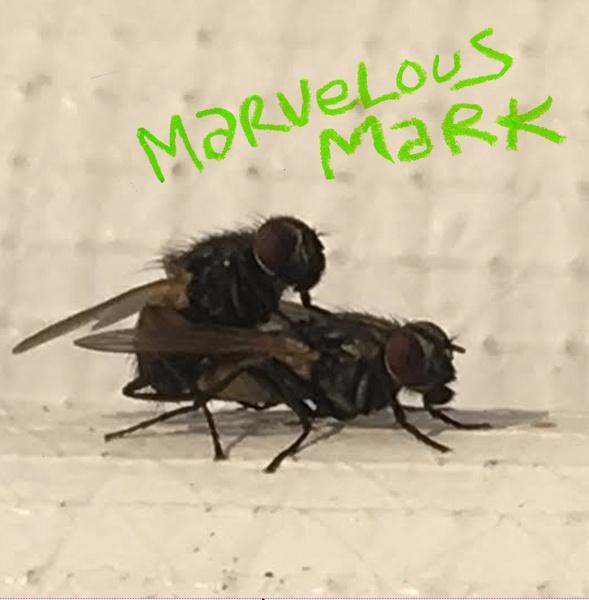 MARVELOUS MARK, buzzin´ (still smoking) cover