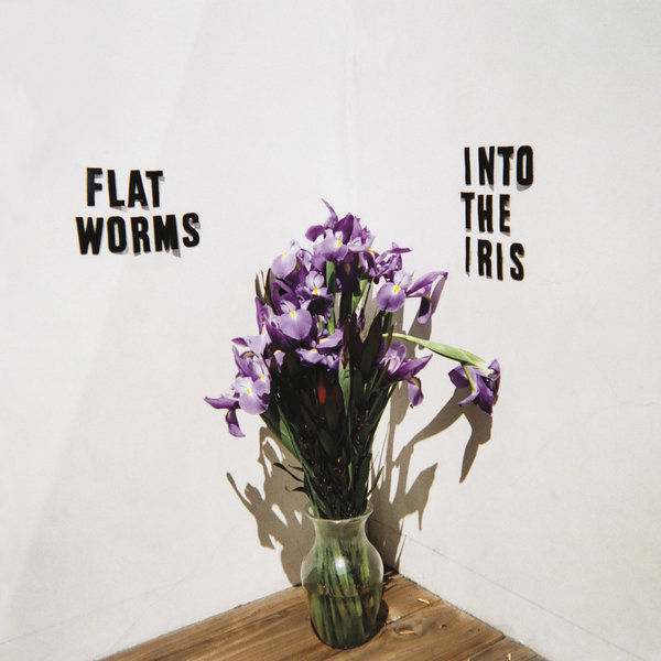 FLAT WORMS, into the iris cover