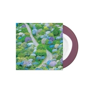 FIDDLEHEAD, between the richness (white / purple) cover