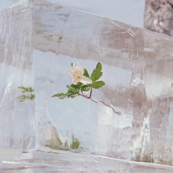 EFTERKLANG, windflowers cover