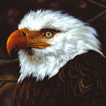 MOGWAI, hawk is howling cover
