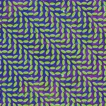 Cover ANIMAL COLLECTIVE, merriweather post pavillon