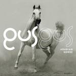 GUS GUS, arabian horse cover